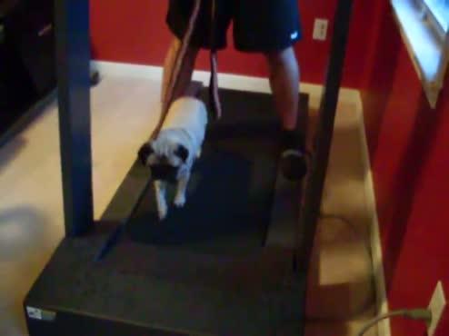 pugmill