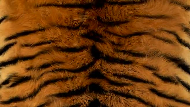 Seamless tiger fur video
