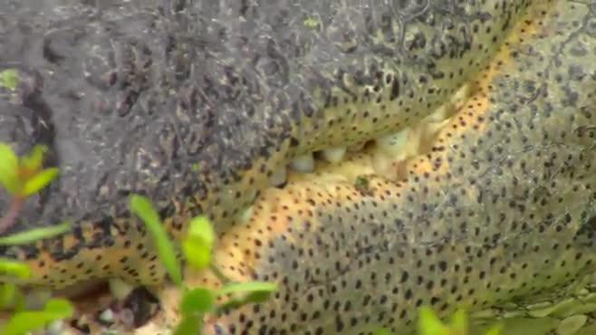 Aquarium Footage (set to Dwayne Wegley's Float Away)
