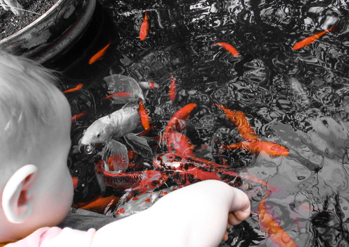 Baby_and_fishies