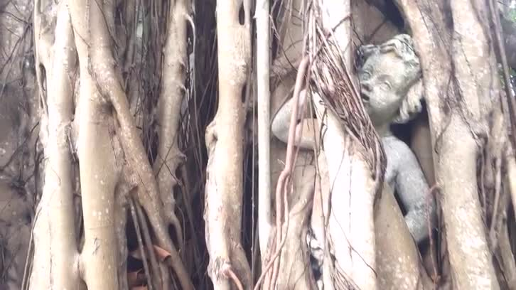 Video: Statue Swallowed by Tree