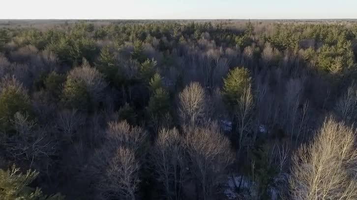 DRONE SHOT (Canadian Treetops)