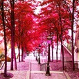 Montmartre-red-edit