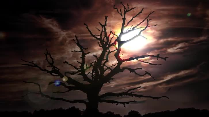 Spooky Tree Animation