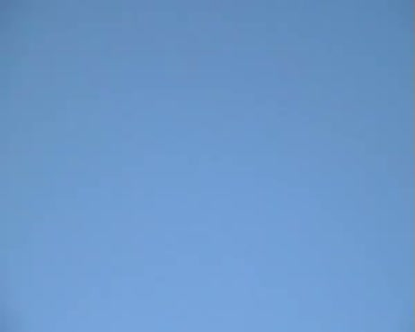 Birds flying footage