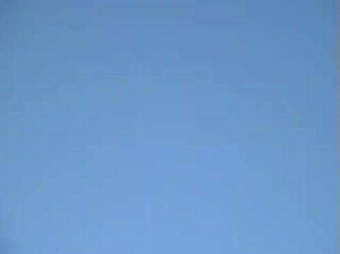 Flying birds - avi file