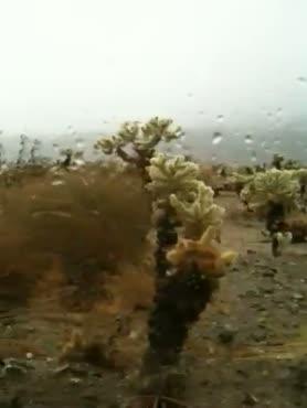 joshua tree-fallen angels