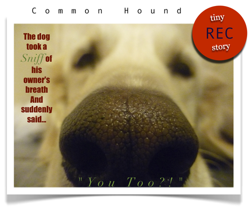 Common_hound