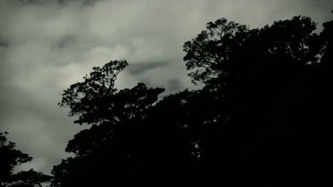 Dream Song Film