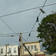 The_clothes_line_spider