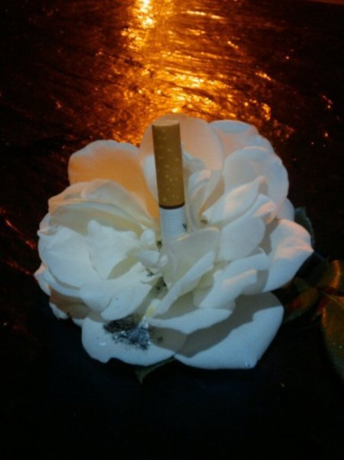 Mattcigflower