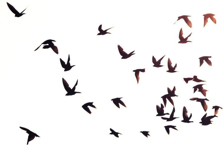Bird flying silhouette tumblr - photo#10