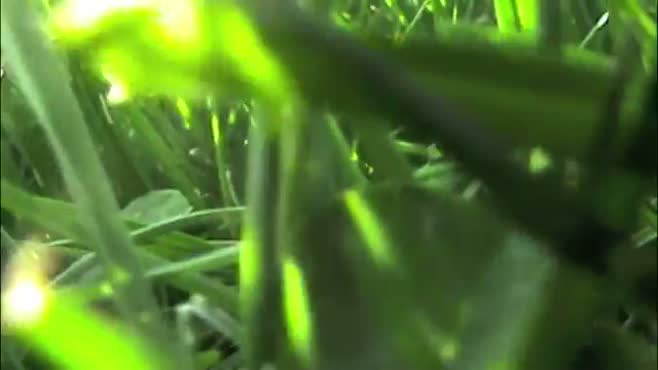 The grass crawl