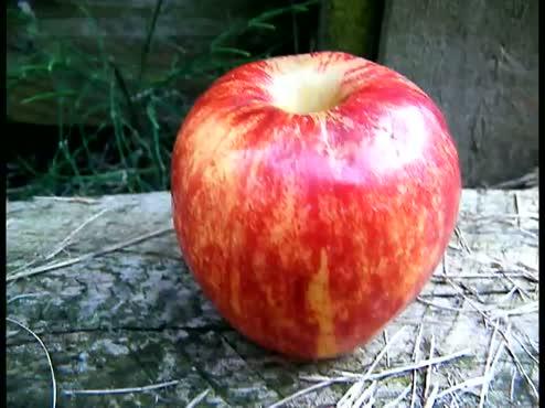 apple needs music